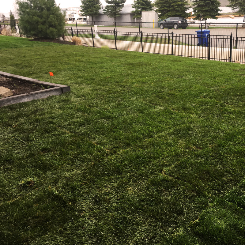 New sod freshly installed