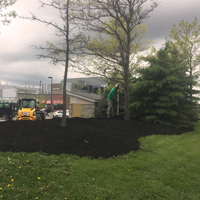 Mulch installation and landscaping with employee
